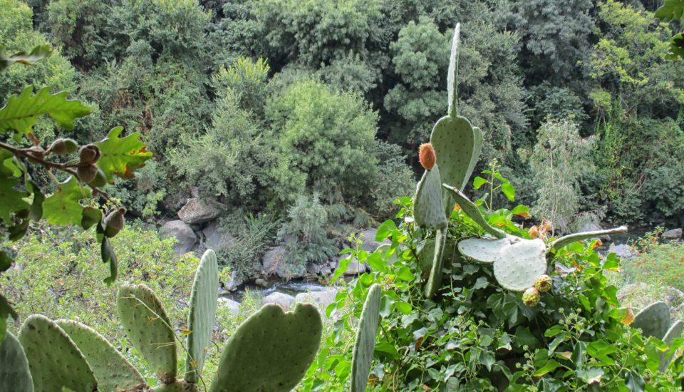 Etna i Rzeka Alcantara – Ogród Botaniczny