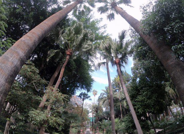 Ogród Botaniczny w Katanii